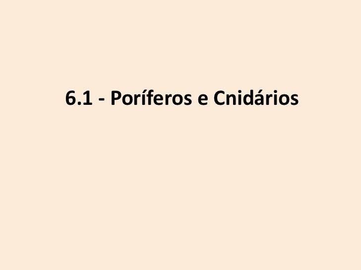 6.1 - Poríferos e Cnidários