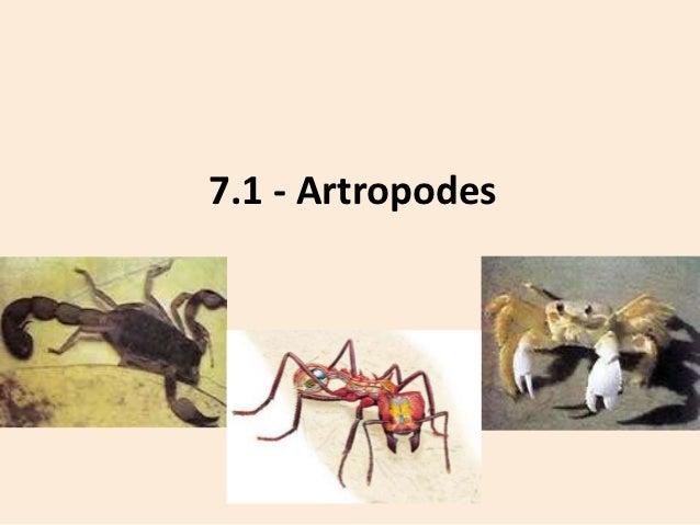 7.1 - Artropodes