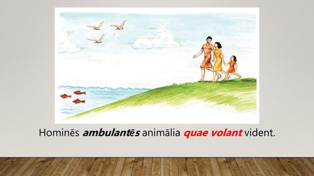 Hominēs ambulantēs animālia volantia vident.