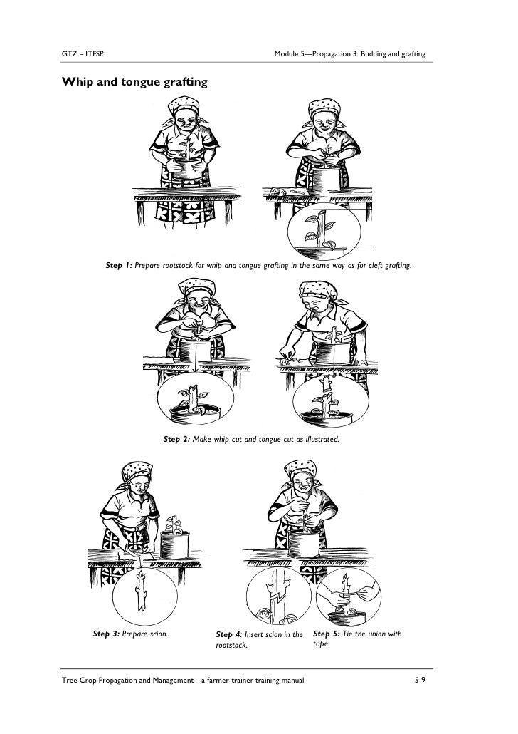 cara cantuman dilakukan (animasi)