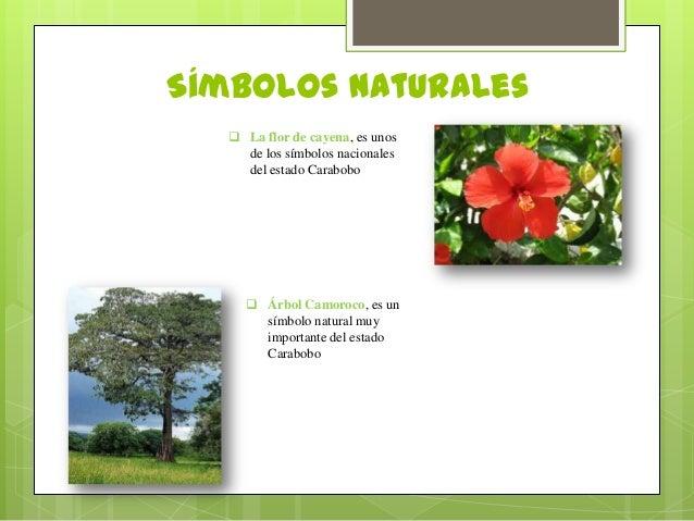 Ubicacion De Los Simbolos Naturales Del Estado Carabobo | estado carabobo