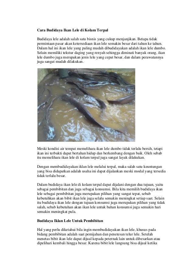 Cara Budidaya Ikan Lele di Kolam Terpal Budidaya lele adalah salah satu bisnis yang cukup menjanjikan. Betapa tidak permin...