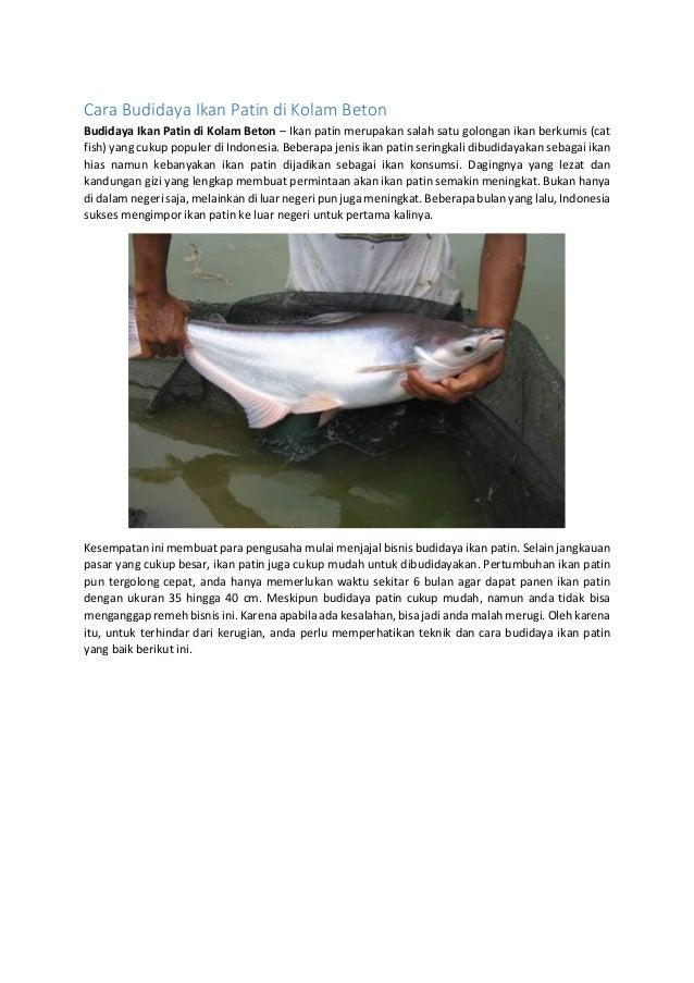 Cara Budidaya Ikan Patin Di Kolam Beton