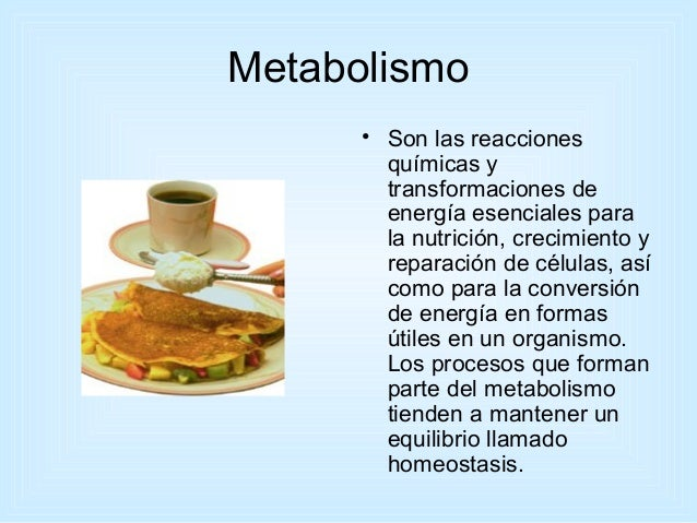 4 números Twitter desea que se olvide de Metabolismo basale