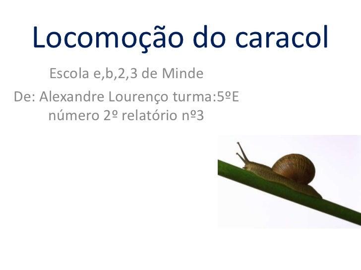 Locomoção do caracol     Escola e,b,2,3 de MindeDe: Alexandre Lourenço turma:5ºE     número 2º relatório nº3