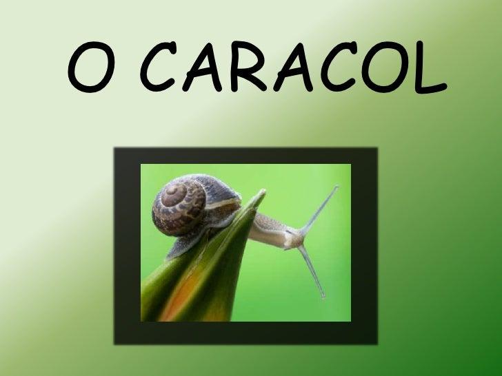 O CARACOL