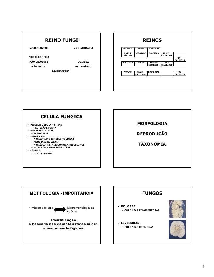 REINO FUNGI                                              REINOS =S R.PLANTAE                      =S R.ANIMALIA     VEGETA...