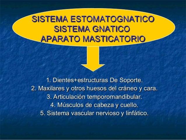 SISTEMA ESTOMATOGNATICOSISTEMA ESTOMATOGNATICO SISTEMA GNATICOSISTEMA GNATICO APARATO MASTICATORIOAPARATO MASTICATORIO 1. ...