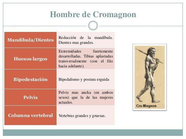 Hombre de Cromagnon Mandíbula/Dientes Reducción de la mandíbula. Dientes mas grandes. Huesos largos Extremidades fuertemen...