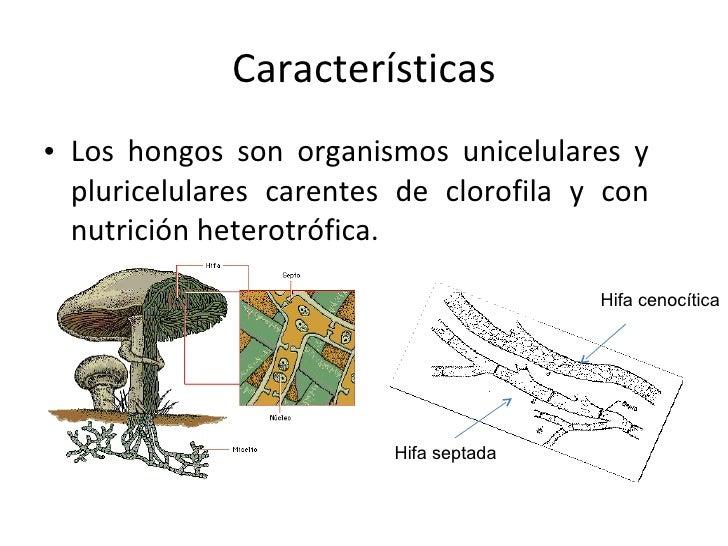 cuantos tipos de hongos existen y algunas de sus caracter On cuantos tipos de hongos existen