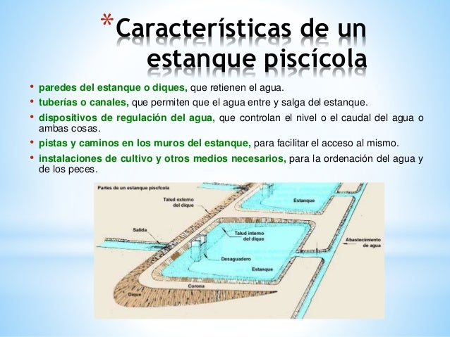 Caracter sticas de un estanque pisc cola for Los estanques