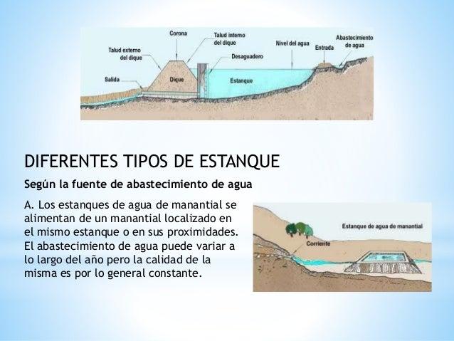 Caracter sticas de un estanque pisc cola for Tipos de estanques