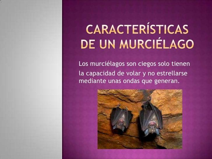 Los murciélagos son ciegos solo tienenla capacidad de volar y no estrellarsemediante unas ondas que generan.