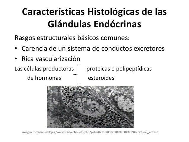 Características histológicas de las glándulas endócrinas
