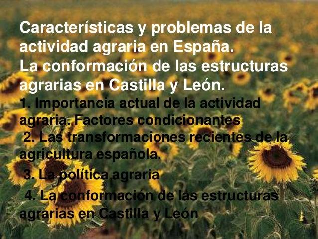 Características y problemas de laactividad agraria en España.La conformación de las estructurasagrarias en Castilla y León...