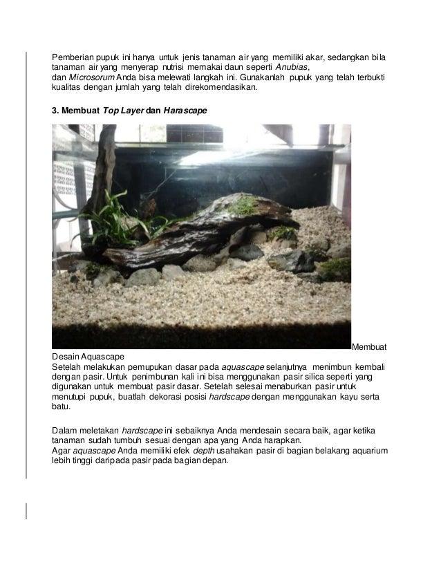 Cara membuat aquascape di aquarium dengan cara yang mudah