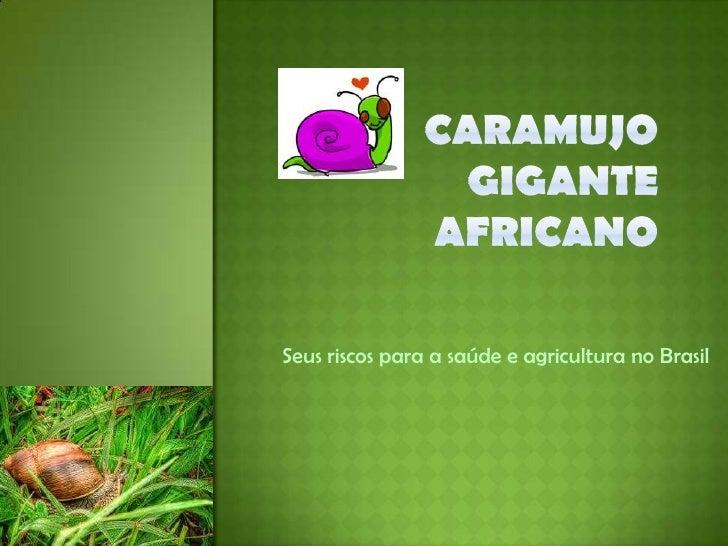 Caramujo gigante africano<br />Seus riscos para a saúde e agricultura no Brasil<br />