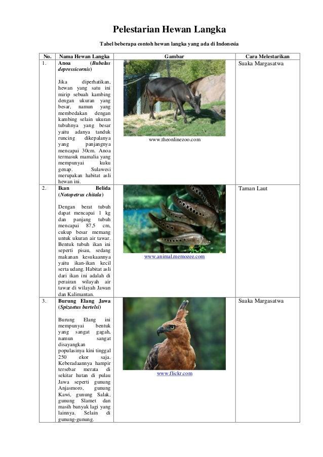63 Koleksi Gambar Dan Manfaat Hewan Langka HD Terbaru