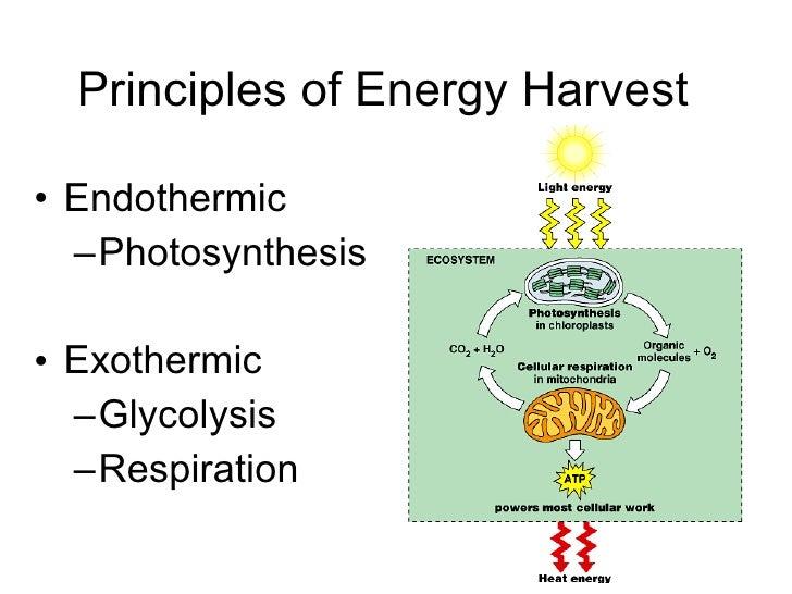 Principles of Energy Harvest <ul><li>Endothermic </li></ul><ul><ul><li>Photosynthesis </li></ul></ul><ul><li>Exothermic </...