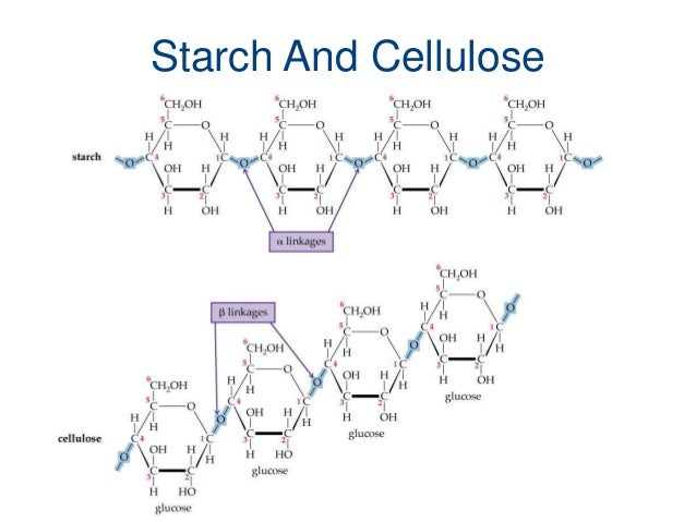 chemistry and carbohydrates essay Biochemistry questions and answers with explanation for interview, competitive examination and entrance test fully solved examples with detailed answer description, explanation are given and it would be easy to understand.