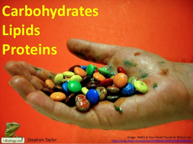 Carbohydrates Lipids Proteins  Stephen Taylor  Image: 'Melts In Your Hand' Found on flickrcc.net http://www.flickr.com/pho...