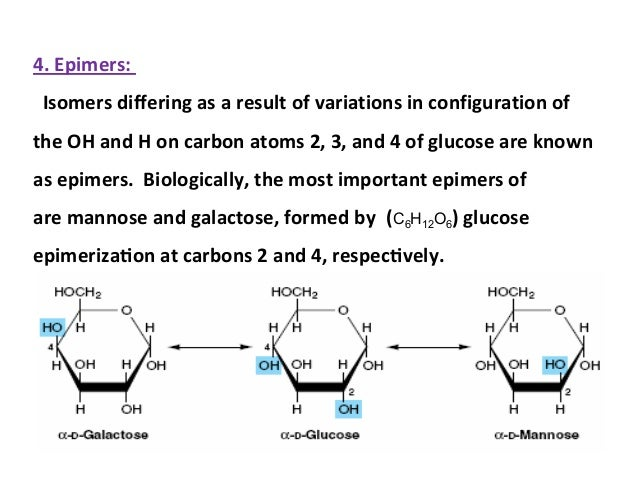 relationship between glucose fructose and galactose