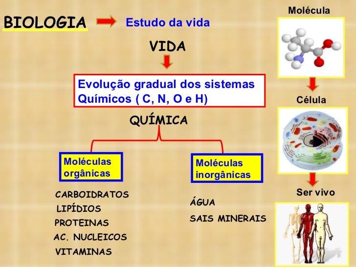BIOLOGIA Estudo da vida VIDA Evolução gradual dos sistemas Químicos ( C, N, O e H) QUÍMICA Moléculas orgânicas  Moléculas ...
