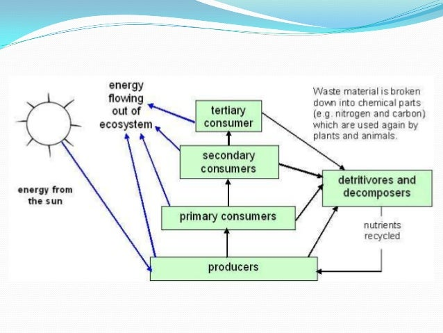 Carbon and nitrogen cycle diagram biology auto wiring diagram today carbon and nitrogen cycle rh slideshare net tundra carbon cycle diagram blank carbon cycle diagram activity ccuart Choice Image