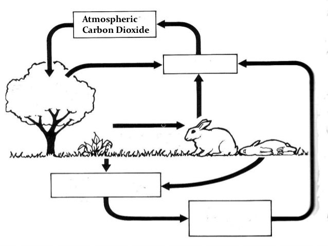 Carbon and nitrogen cycle 13 atmospheric carbon dioxide respirationplants ccuart