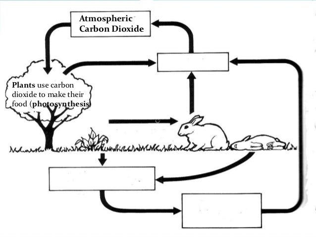 Carbon and nitrogen cycle – Nutrient Cycle Worksheet