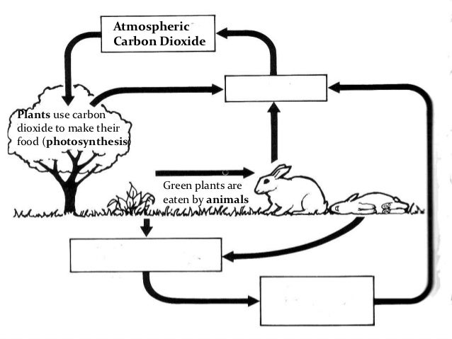 Worksheet Carbon Cycle Worksheets carbon and nitrogen cycle