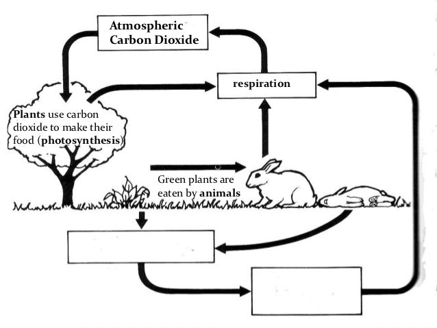 Carbon Cycle Worksheet Middle School – Carbon Cycle Worksheet