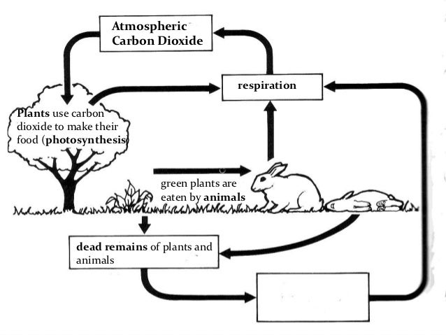 Carbon and nitrogen cycle – Carbon Compounds Worksheet
