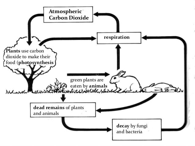 Carbon and nitrogen cycle carbon cycle diagram ccuart