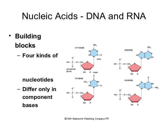 Amino Acids Are The Building Blocks For Which Organic Group