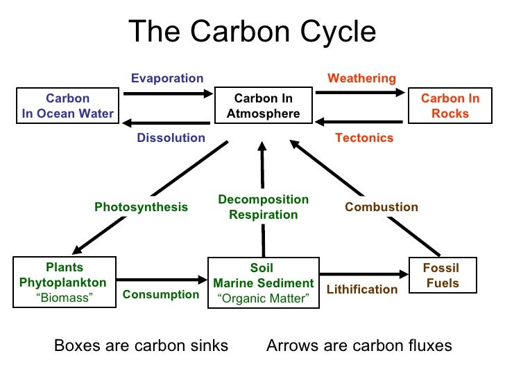Carbon atom diagram moving through plants diy wiring diagrams carbon cycle rh slideshare net carbon atom model carbon atom periodic table ccuart Gallery