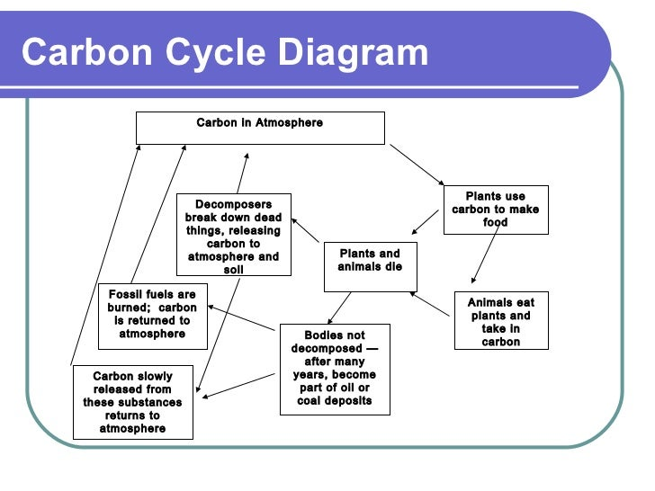 Carbon cycle carbon cycle diagram ccuart