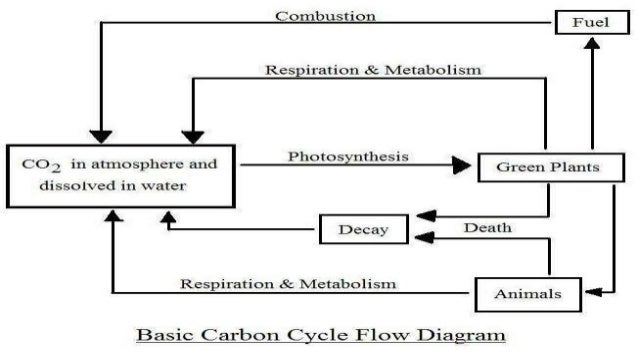 Carbon cycle 4 global carbon ccuart Images