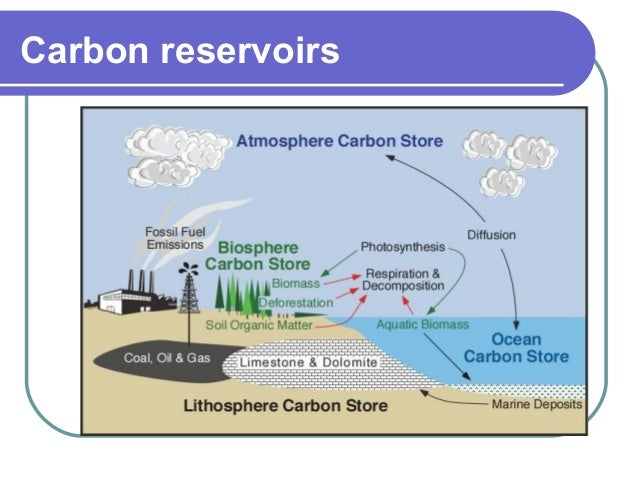 Diagram Carbon Cycle Reservoirs