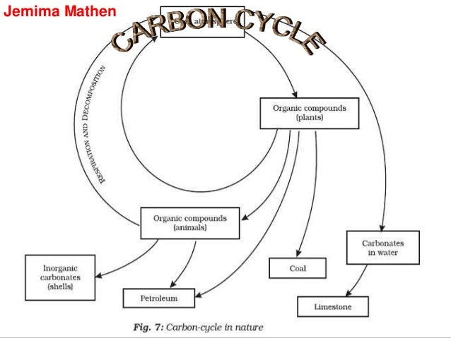 Carbon cycle life forms are based on carbon containing molecules like ccuart Choice Image