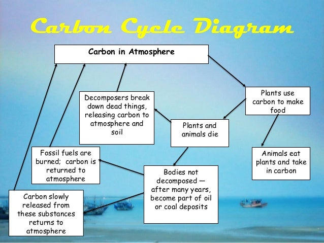 Carbon cycle the carbon cycle 10 ccuart Image collections