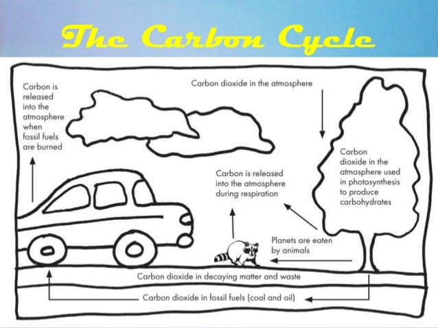 human impact on the carbon cycle Read chapter background: the usgcrp's carbon cycle working group asked the national research council's committee on the human dimensions of to the carbon cycle of existing bodies of research on (a) human activities that affect the carbon cycle (eg, on energy modeling on the underlying causes of fossil fuel.