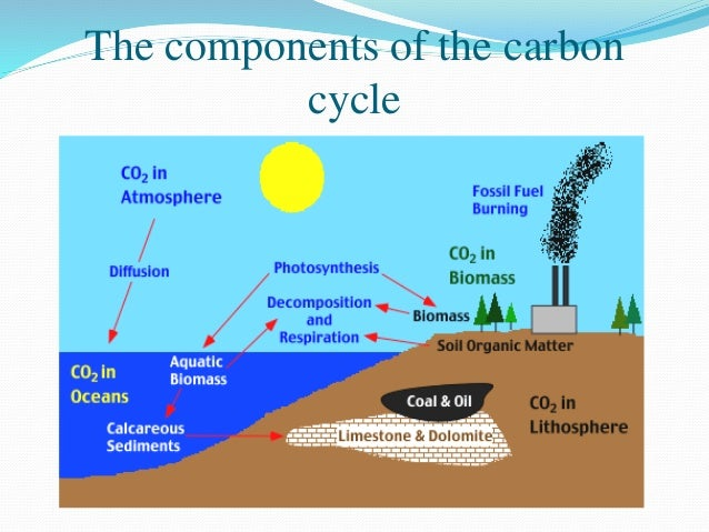 carbon cycle the cycle of a component of life In vivo toxicity assessment of occupational components of the carbon nanotube life cycle to provide context to potential health effects.