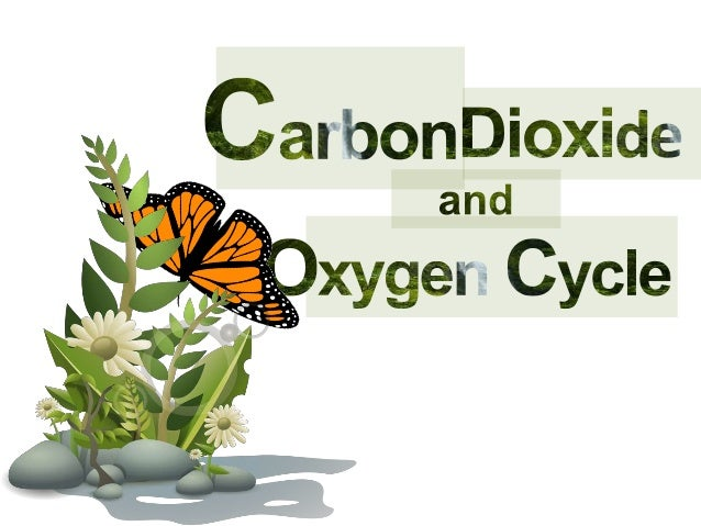Carbon dioxide and oxygen cycle