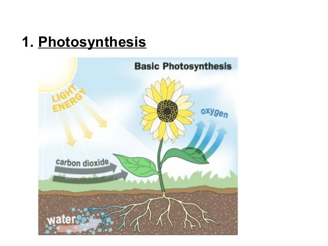 Oxygen in photosynthesis cycle role of trna molecule in protein synthesis