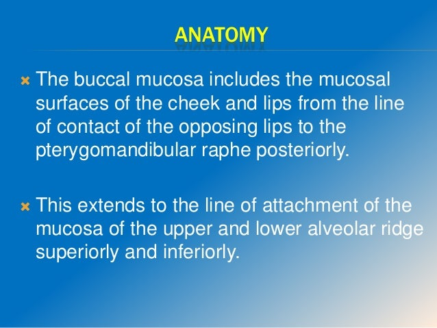 ANATOMY  The buccal mucosa includes the mucosal surfaces of the cheek and lips from the line of contact of the opposing l...