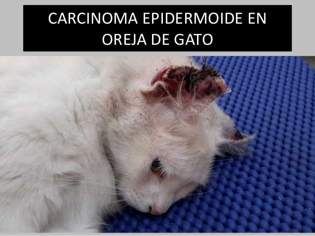 CARCINOMA EPIDERMOIDE EN OREJA DE GATO