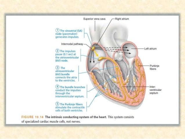 شویدي ویشل برخو عمده دوه په نظمۍ بې قلبي: .ABradyarrhythmias .BTacharrhythmias
