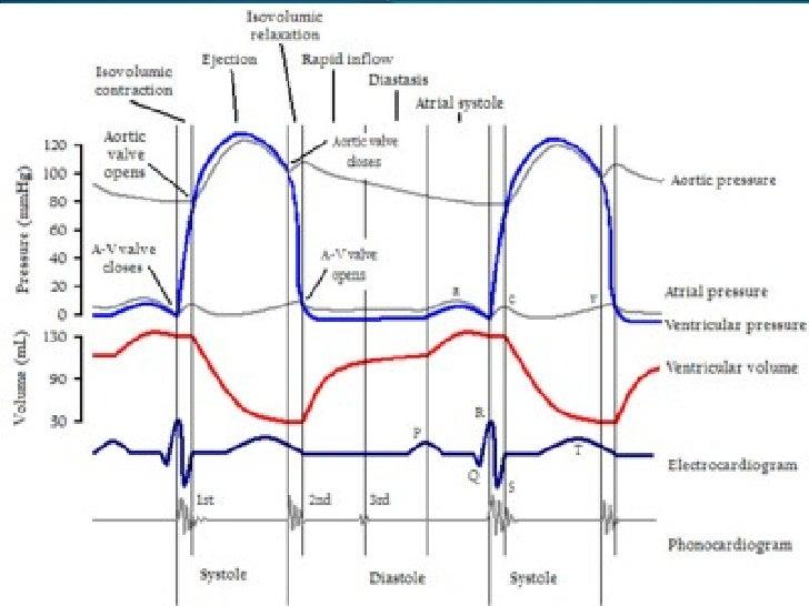 Cardiac Cyclefull