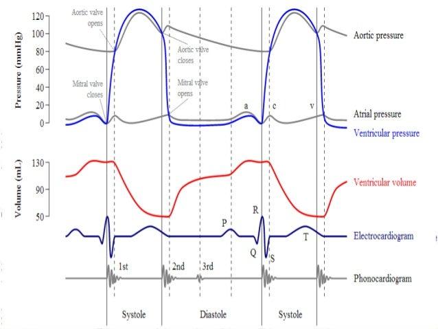 wiggers diagram explained phase wire data schema u2022 rh 45 63 76 146